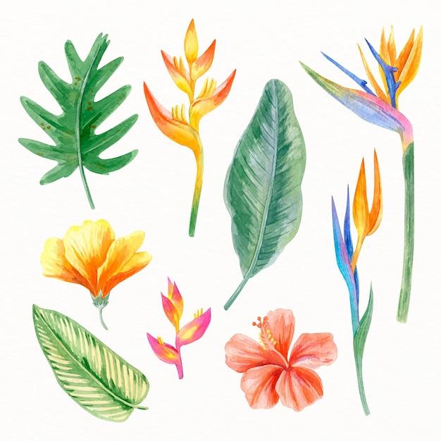 Raccolta di fiori e foglie tropicali dipinti Vettore gratuito