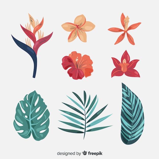 Raccolta di fiori e foglie tropicali Vettore gratuito