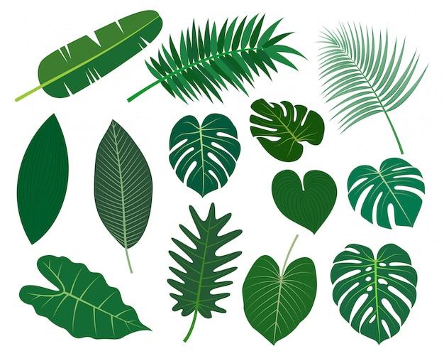 Raccolta di foglie tropicali insieme vettoriale Vettore Premium