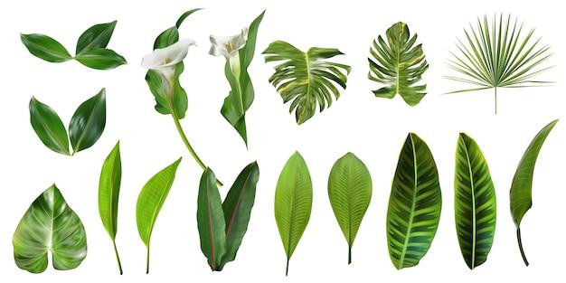 Raccolta di foglie tropicali isolata Vettore Premium