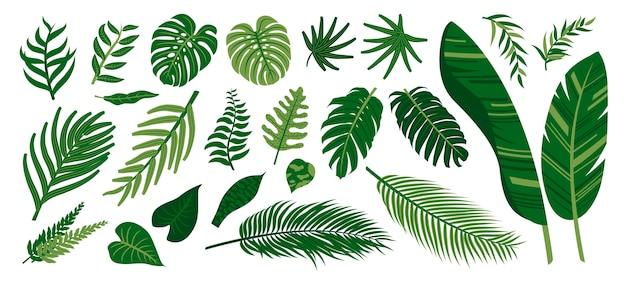 Raccolta di foglie tropicali Vettore Premium