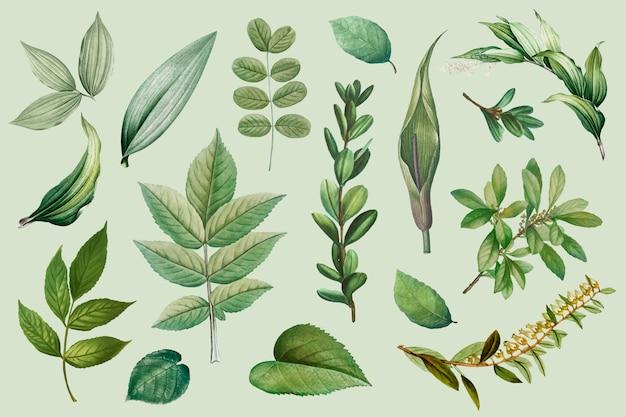 Raccolta di foglie vegetali Vettore gratuito