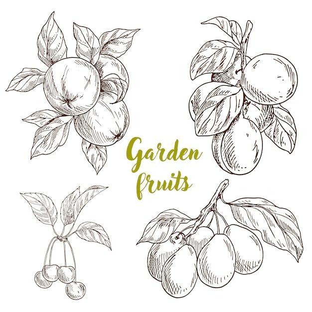 Raccolta di frutti del giardino disegnati a mano Vettore Premium
