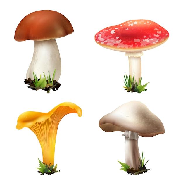 Raccolta di funghi foresta realistica Vettore gratuito