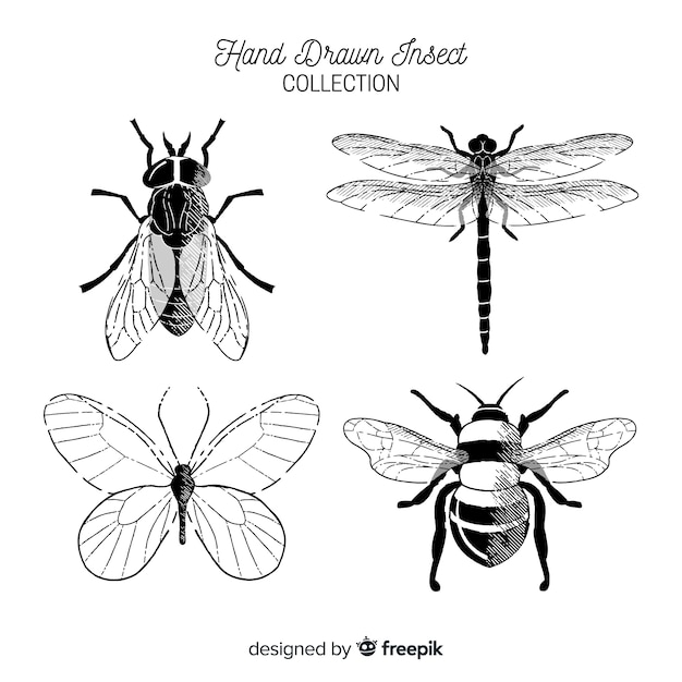 Raccolta di insetti incolori disegnati a mano Vettore gratuito