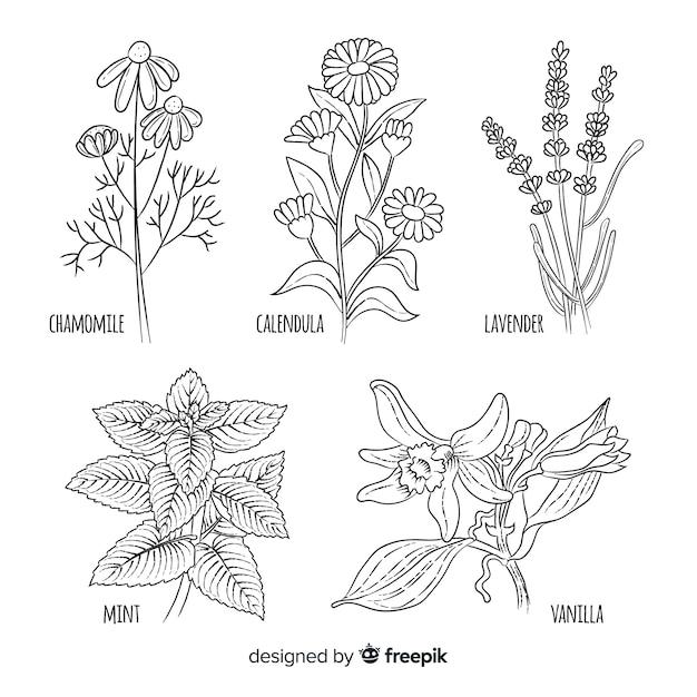 Raccolta di spezie ed erbe aromatiche Vettore gratuito