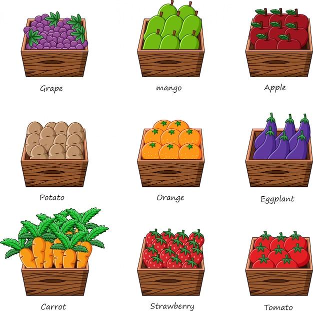 Raccolta di verdure e frutta Vettore Premium