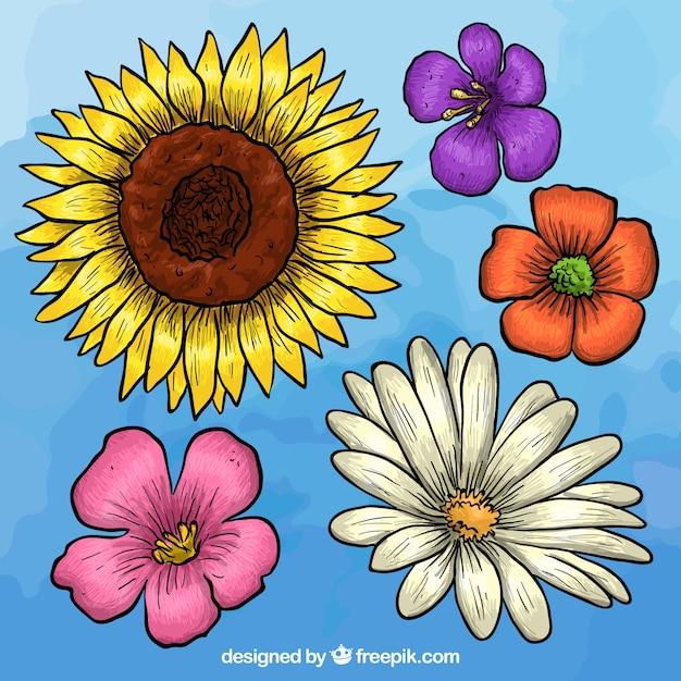 Raccolta fiori disegnati a mano scaricare vettori gratis for Fiori disegnati