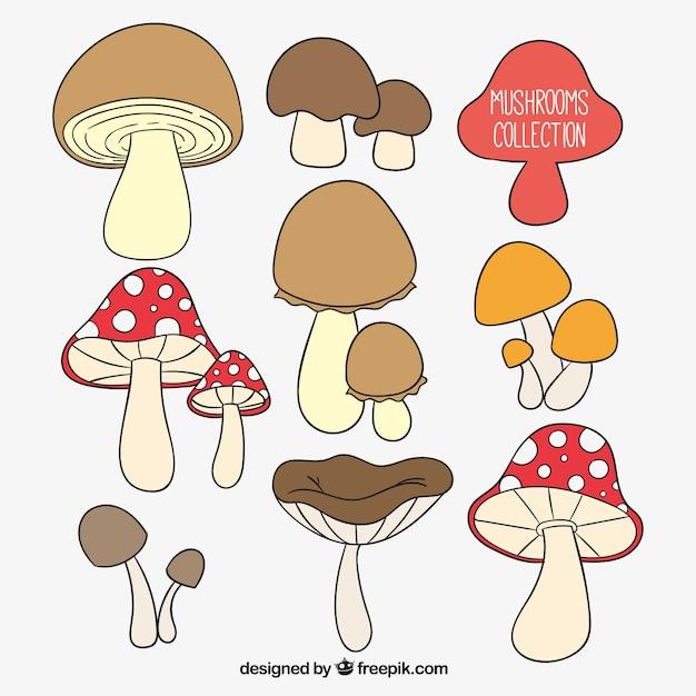 Raccolta funghi disegnati a mano Vettore gratuito