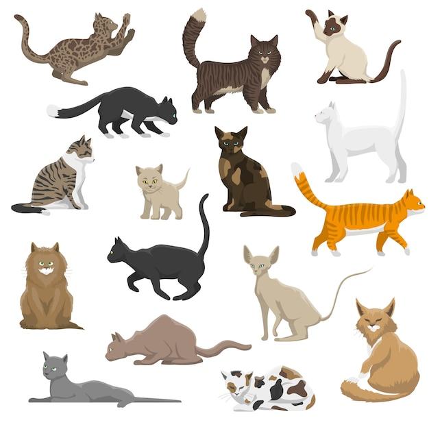 Raccolta piana delle icone di gatti domestici delle razze Vettore gratuito