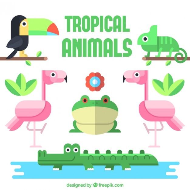 Raccolta tropicali animali in design piatto Vettore gratuito
