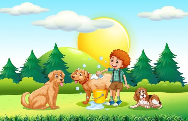 Ragazzo che dà ai cani bagno nel parco Vettore Premium