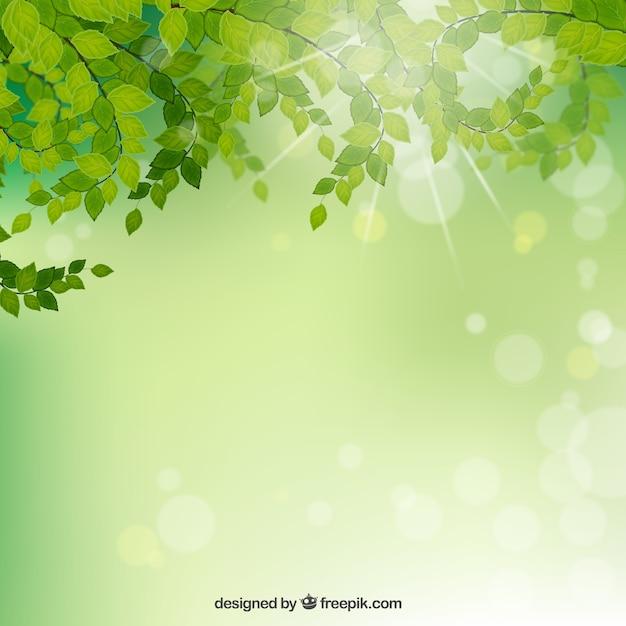 Rami Con Foglie Sfondo Verde Scaricare Vettori Gratis