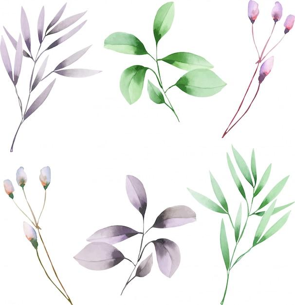 Rami dell'acquerello con foglie verdi e viola Vettore Premium