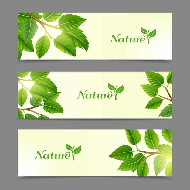 Rami di alberi con set di banner di foglie verdi Vettore gratuito