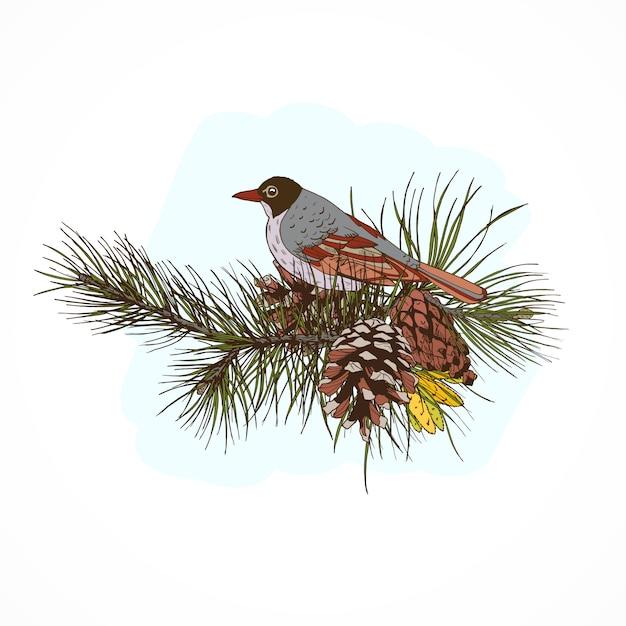 Rami di pino con uccello Vettore gratuito