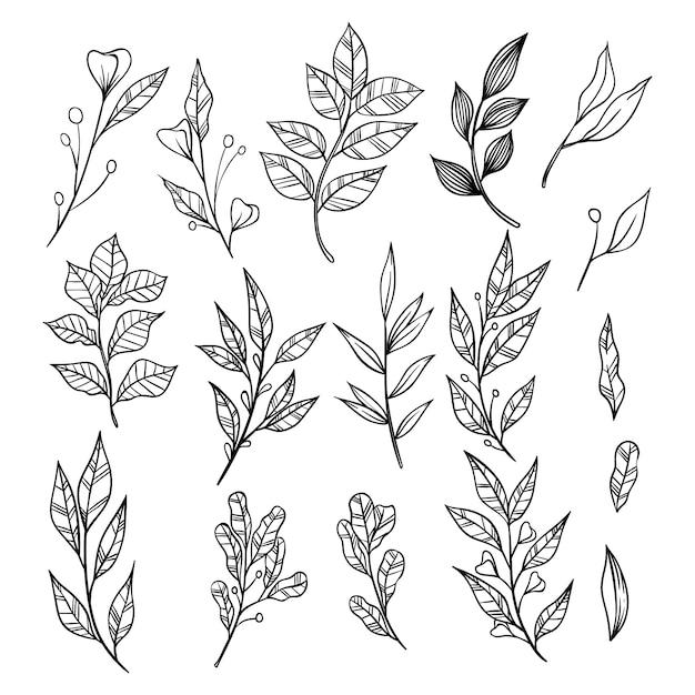 Rami disegnati a mano con raccolta di foglie. elementi decorativi per la decorazione Vettore Premium