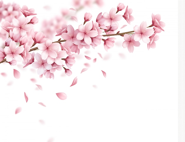 Ramifichi con l'illustrazione realistica della composizione nei bei fiori di sakura e nei petali di caduta Vettore gratuito