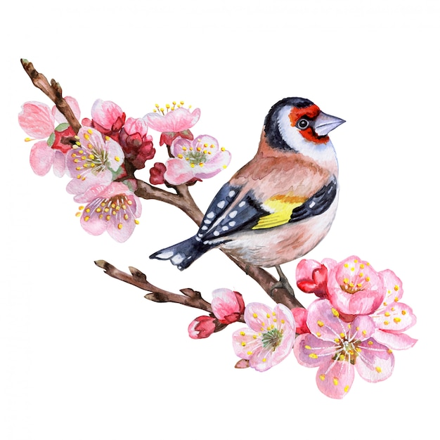 Ramo di ciliegio in fiore con un uccello Vettore Premium