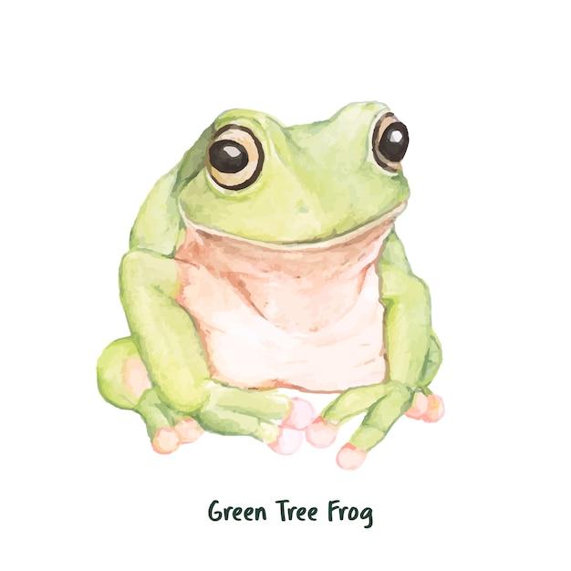Rana di albero verde disegnata a mano Vettore gratuito
