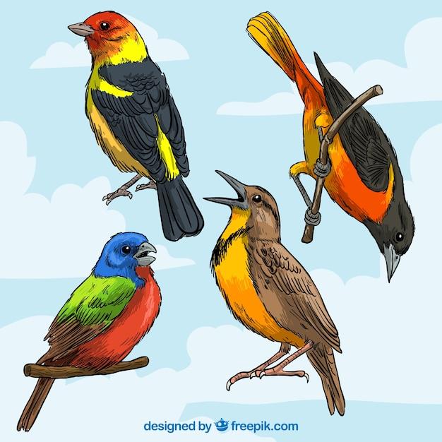 Razze di uccelli colorati scaricare vettori gratis - Semplici disegni di uccelli ...