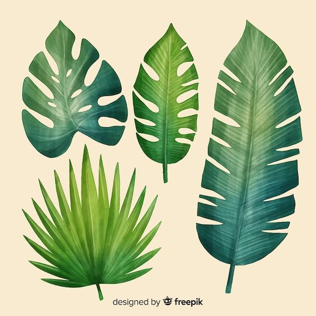 Realistica collezione di foglie tropicali Vettore gratuito