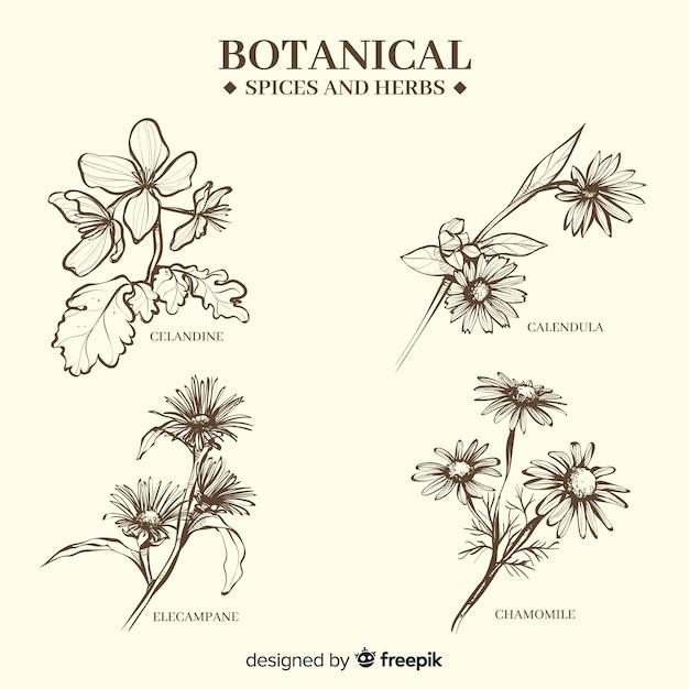 Realistico disegnato a mano spezie ed erbe botaniche Vettore gratuito