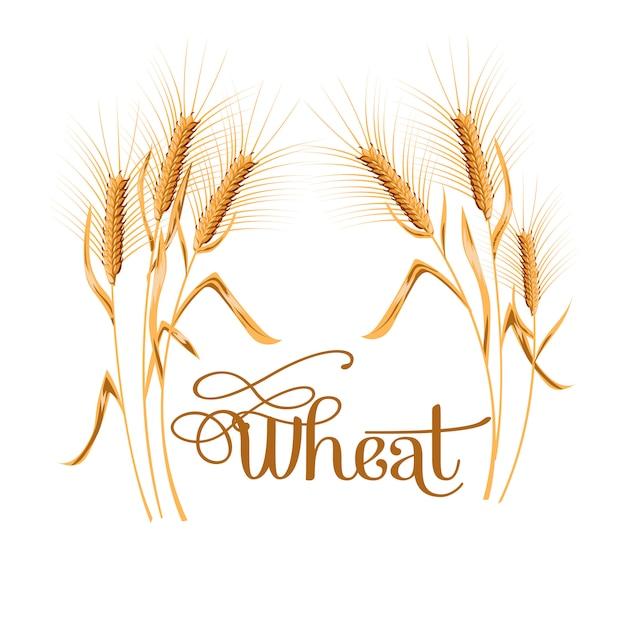 Realistico spiga di grano su sfondo bianco. Vettore Premium