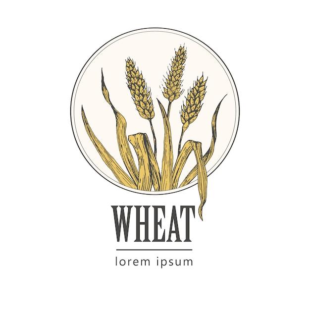 Retro pane del forno o logo della birra con grano, annata Vettore Premium