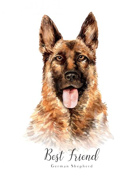 Ritratto disegnato a mano acquerello pastore tedesco cane Vettore Premium