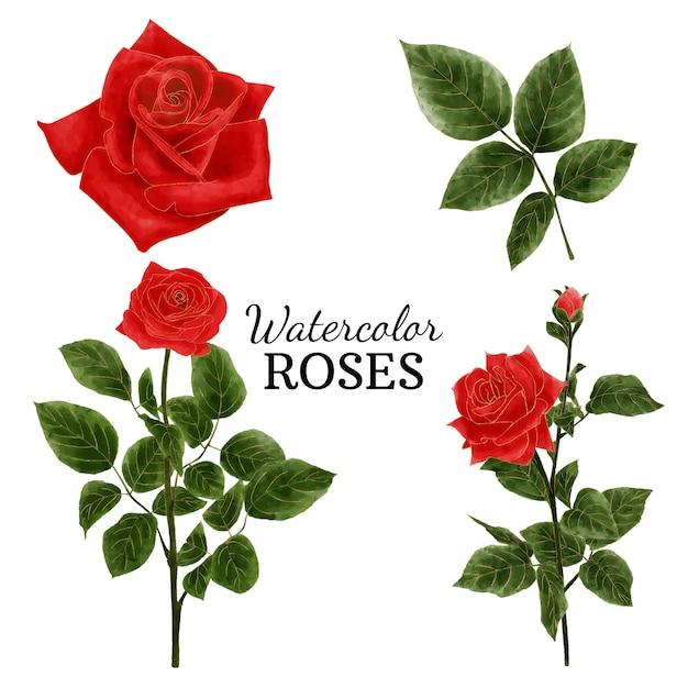Rose ad acquerelli Vettore Premium