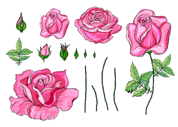 Rose rosa vettoriale e set di elementi verde lascia Vettore Premium