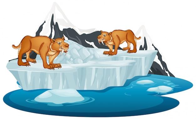 Sabertooth sull'iceberg invernale Vettore gratuito