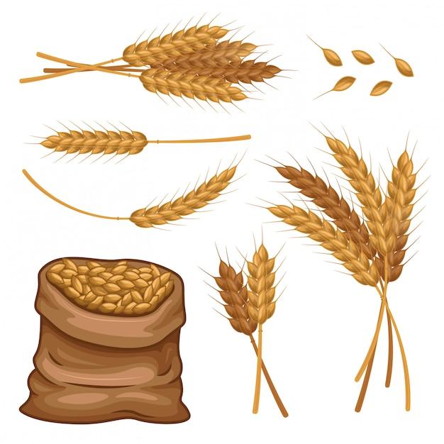 Sacco di grano orecchie e grani insieme vettoriale Vettore Premium
