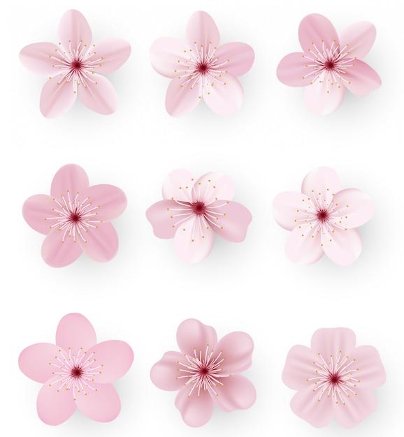 Sakura o fiori di ciliegio Vettore Premium