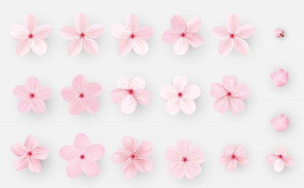 Sakura realistico o fiore di ciliegio Vettore Premium