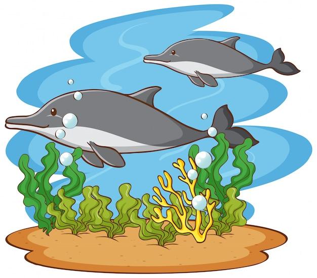 Scena con due delfini nell'oceano Vettore gratuito
