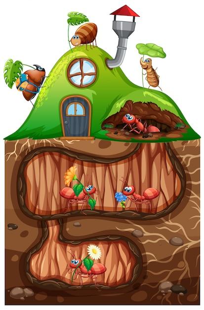 Scena con formiche che vivono sottoterra in giardino Vettore gratuito