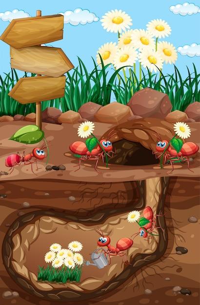 Scena con formiche e fiori in giardino Vettore gratuito