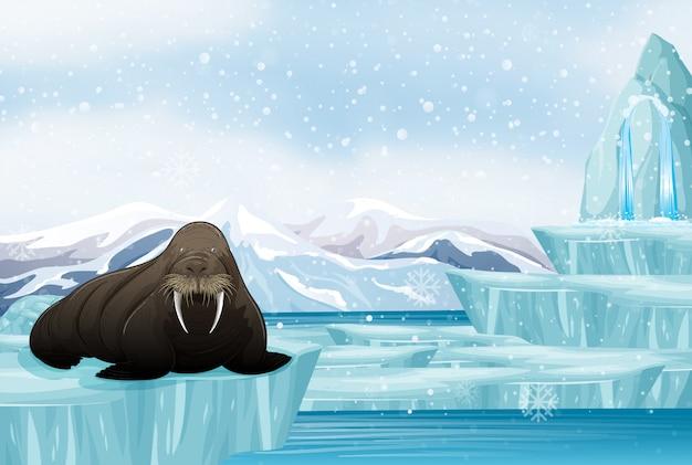 Scena con grandi trichechi sul ghiaccio Vettore gratuito