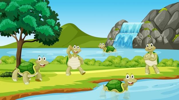 Scena con molte tartarughe nel parco Vettore gratuito