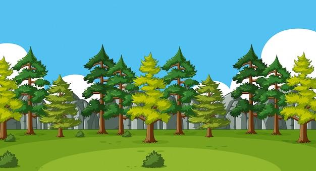Scena del fondo con molti pini nella foresta Vettore Premium