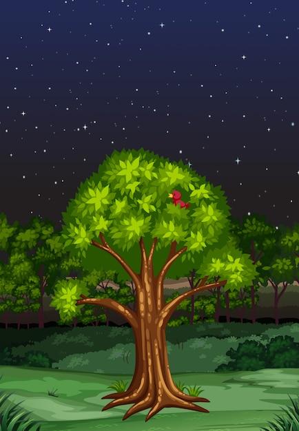 Scena della natura di notte Vettore gratuito