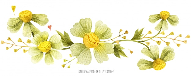 Scenetta di piante selvatiche di prato Vettore Premium