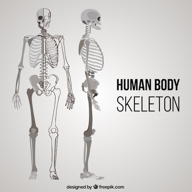 Scheletro corpo umano in posizioni diverse Vettore gratuito