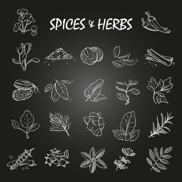 Schizzi la raccolta delle spezie e delle erbe sulla lavagna Vettore Premium