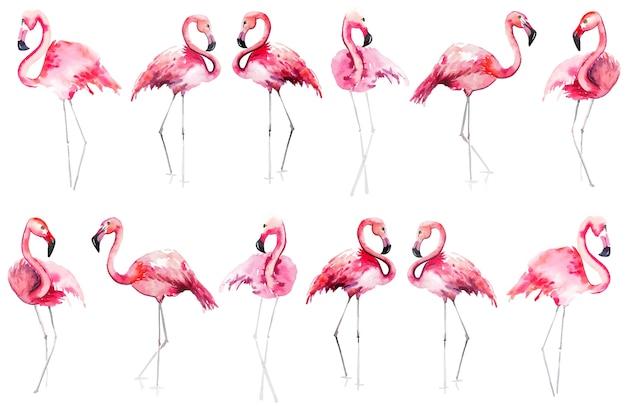 Schizzo della mano dell'acquerello del modello dei fenicotteri rosa Vettore Premium