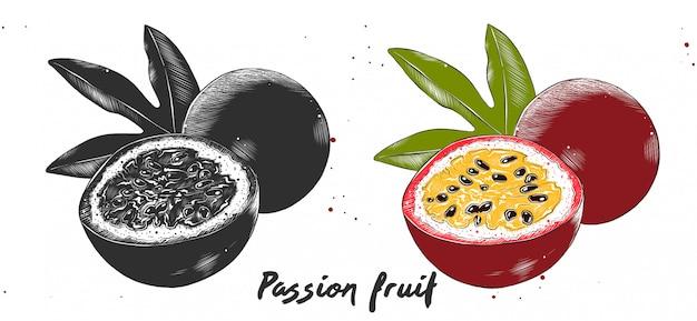 Schizzo di incisione disegnata a mano di frutto della passione Vettore Premium