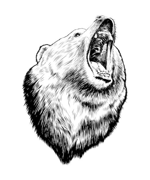Schizzo di orso in nero Vettore Premium
