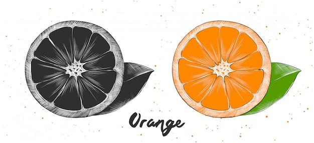 Schizzo disegnato a mano di arancia Vettore Premium
